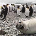 anjing laut selfie